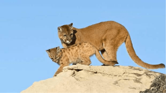 Wildlife | About The Property | The Lodge at Bryce Canyon | Forever Resorts Careers